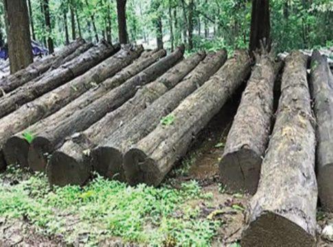 Muttil tree smugglin