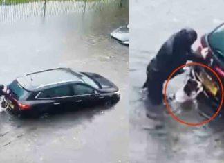 Dog Helps to push tha car