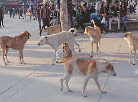 Street Dogs In Kasargod
