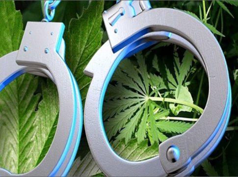 Cannabis Case