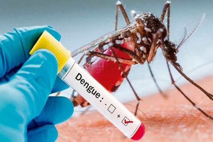 Dengue fever-up