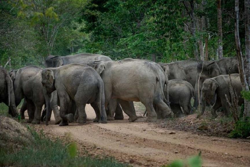 elephant-kasargod