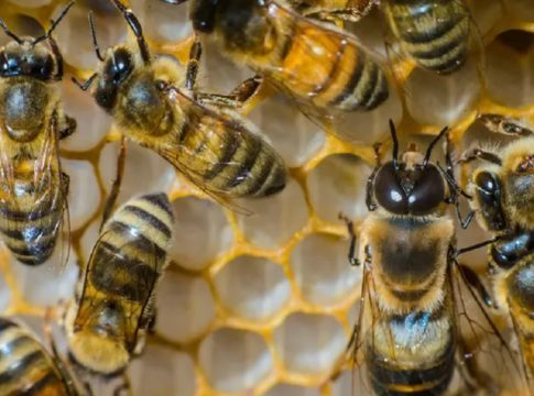 bee attack-kannur