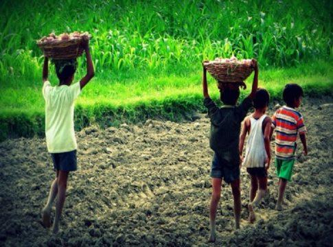 child labour_idukki plantation area