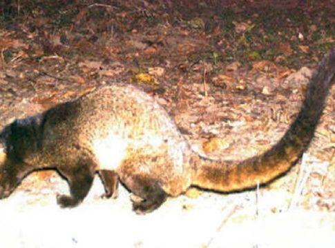 mammal found in Nilgiris