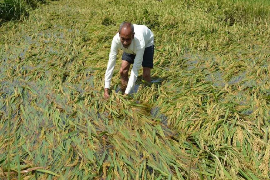 Farming Issues Due To Heavy Rain