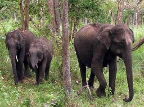 Wild Elephant Attack In Kannur Rajagiri