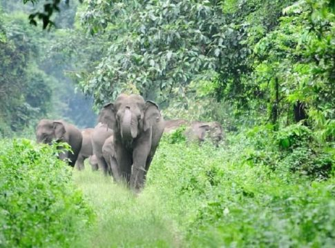 Wild elephant Attack In Kadalkkandam In Kannur