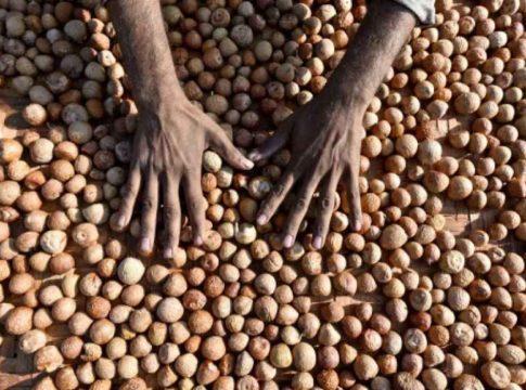 Areca Nut Seized