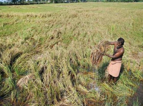 Agriculture-palakkad
