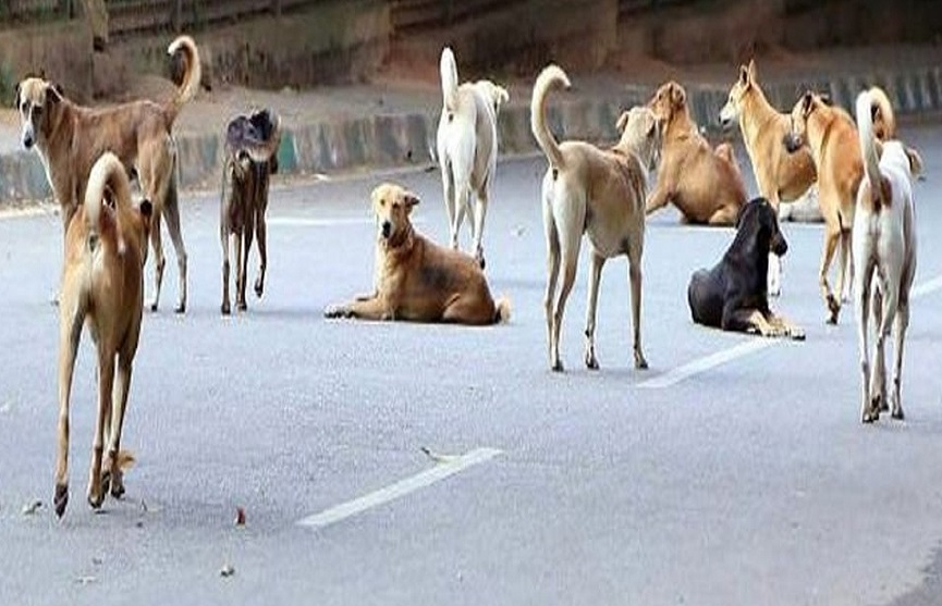 street dog attack