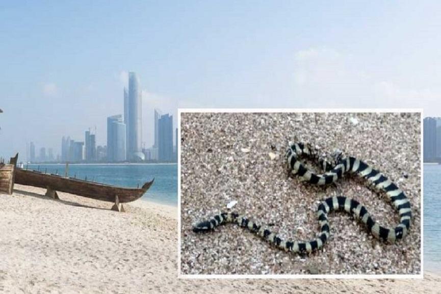 sea-snakes-
